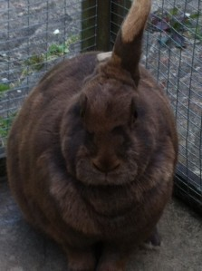 One of my children's rabbits, Juliette