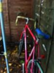 peloton and bike
