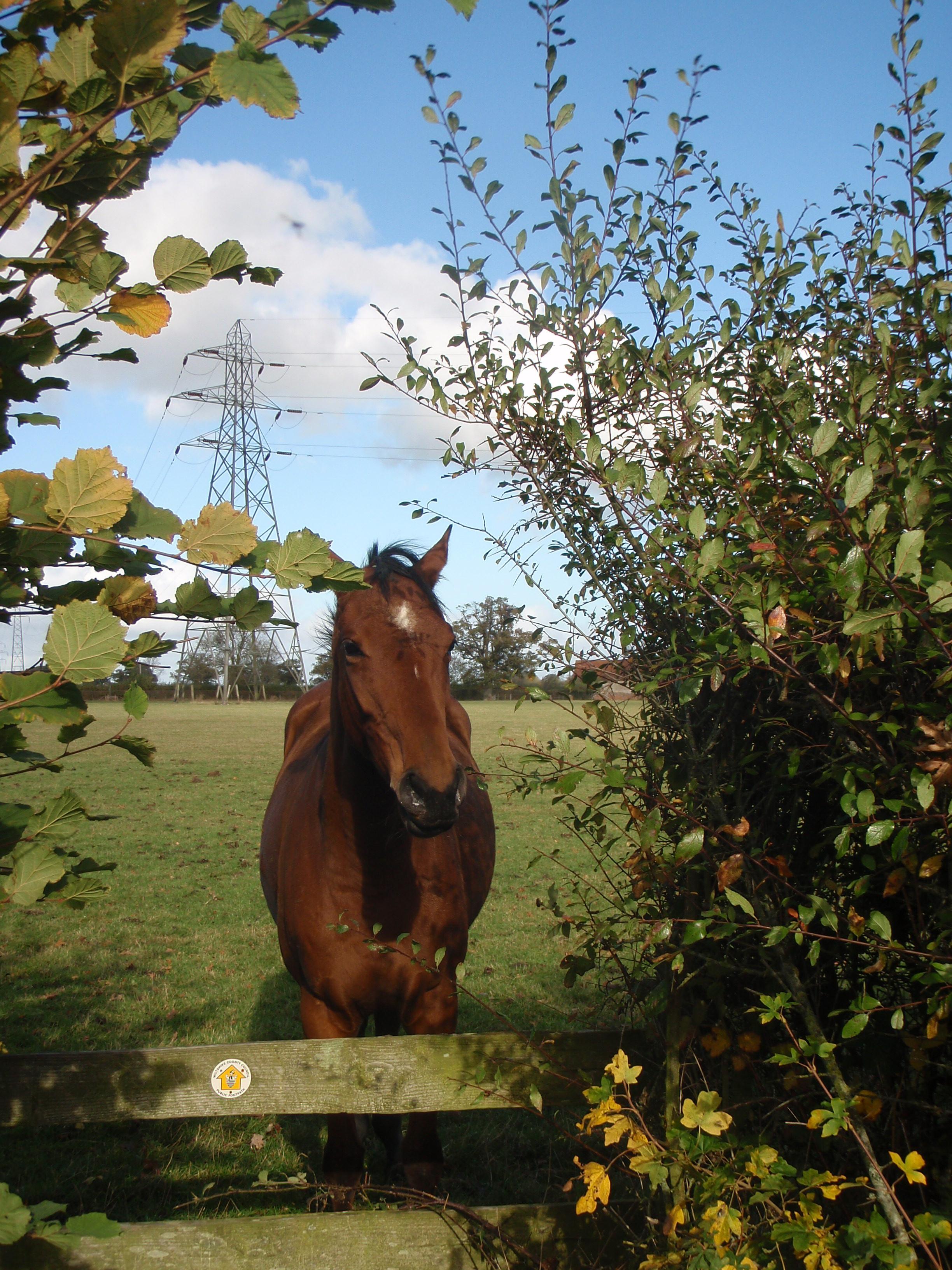 Philip levine the horse