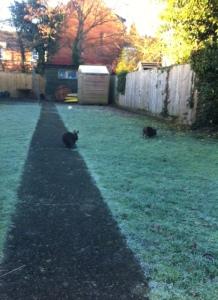 long garden path