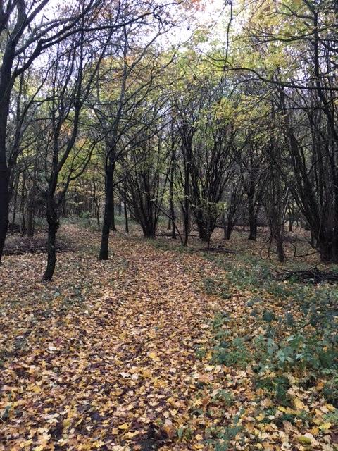 autumn-c