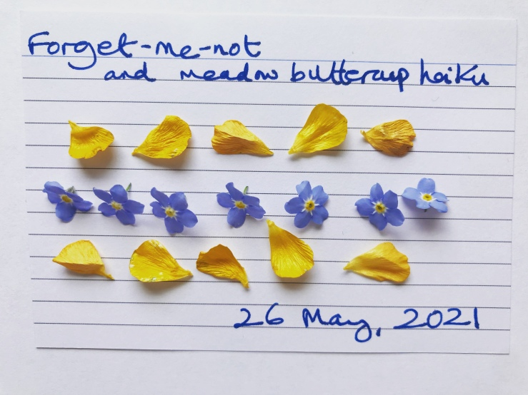 The image is of buttercup and forget-me-not petals arranged on three lines like a haiku, with each petal representing one syllable.