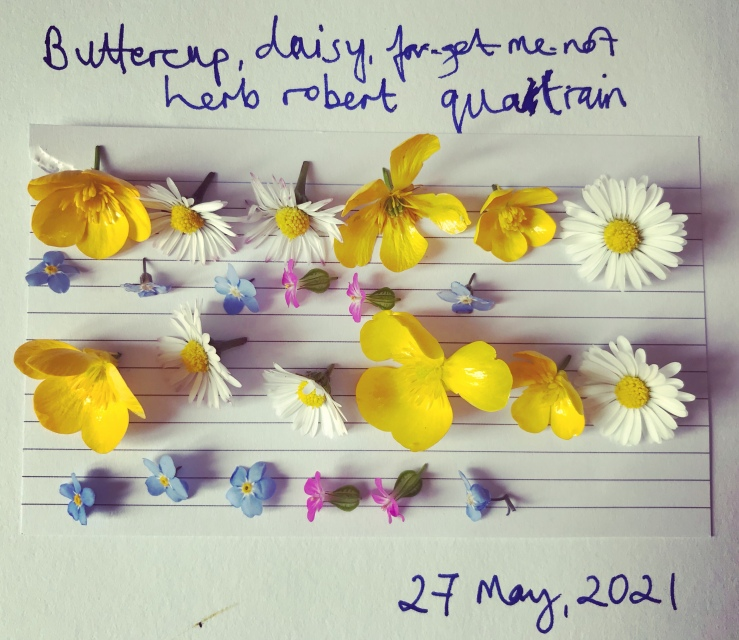 The image is of petals of buttercups, forget-me-nots, herb robert and daisies arranged in lines like a quatrain