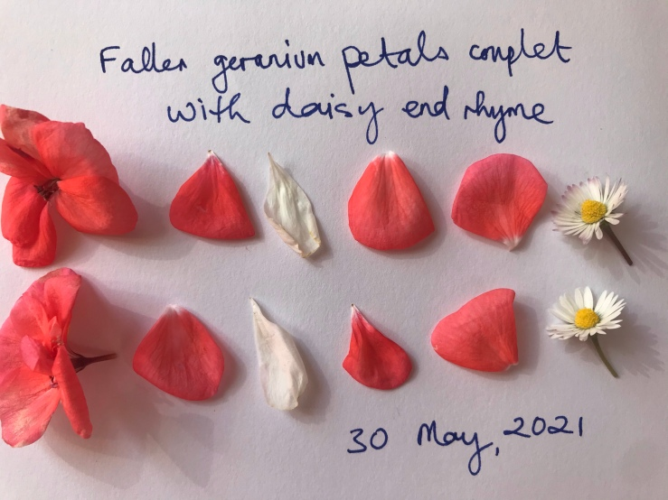 The image is of petals of geraniums and daisies arranged in two lines like a couplet