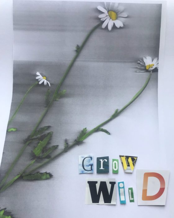 The image is of oxeye daisies photocopied and painted by Josephine Corcoran, with the words 'Grow Wild' added
